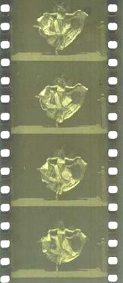 A similar film as shown by Jenkins June 6, 1894.
